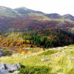 Golden Autumn on Bjelasnica Mountain